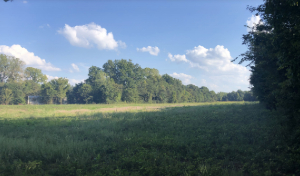 Ash Slough, Shelby County, 268 +/- Acres